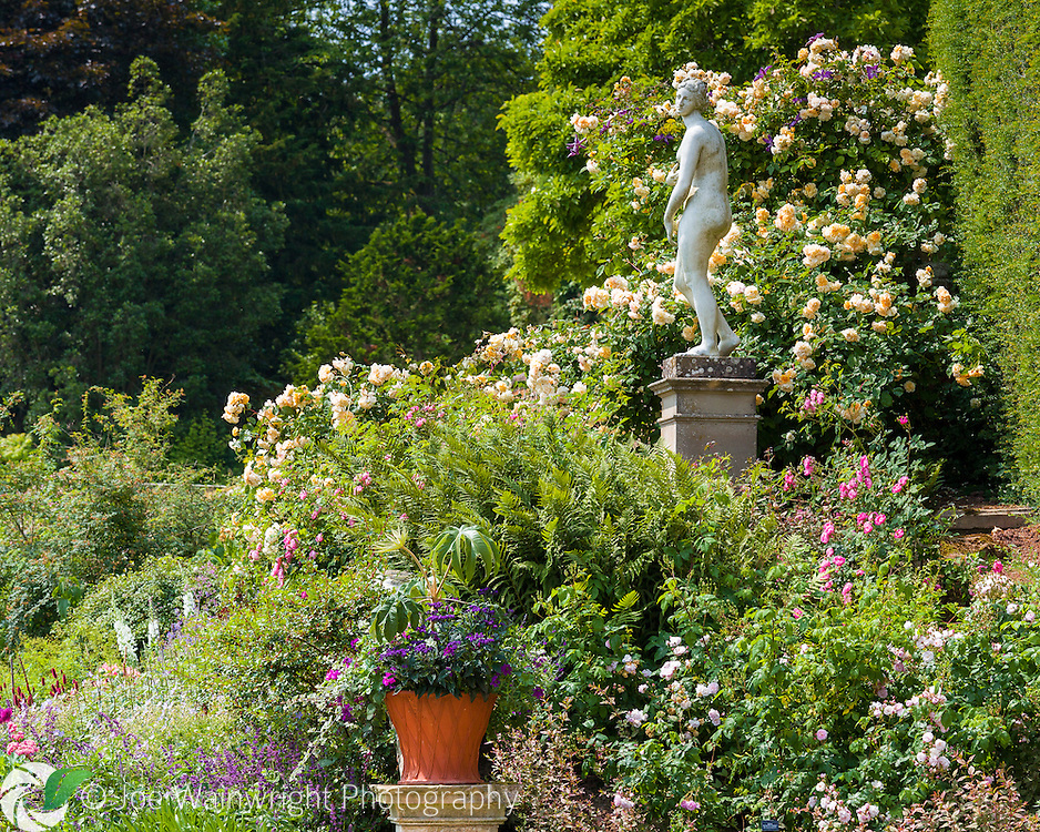 A classical statue is surrounded by tumbling roses, clematis and ferns on the Orangery terrace at Powis Castle, Welshpool, Mid Wales.  Photographed in July.