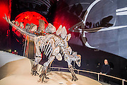 The World's most complete Stegosaurus fossil goes on permanent display in front of the Museum's iconic earth globe - At 560 centimetres long and 290 centimetres tall, similar in size to a 4x4 vehicle, the 150 million year old has over 300 bones. It is also the first complete dinosaur specimen to go on display at the Natural History Museum in nearly 100 years. It goes on permanent public display from 4 December 2014.