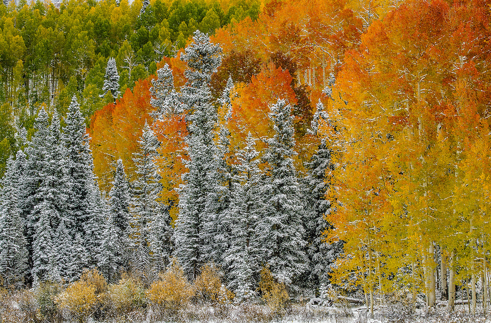 Fresh new snow decorates an autumn landscape in the Uncompahgre Range & wilderness; Uncompahgre National Forest, Owl Creek Pass, Colorado