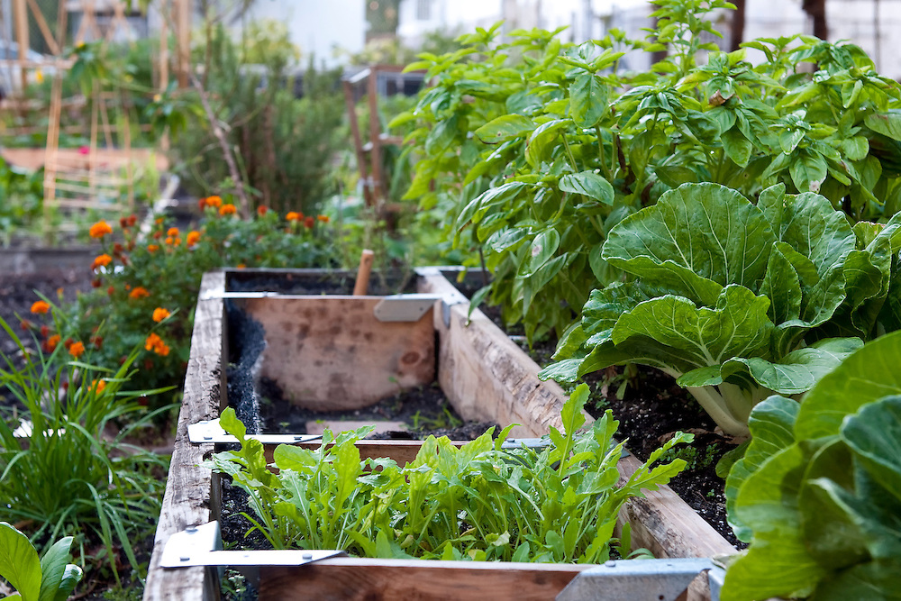 View of plants and garden of organic vegetables.