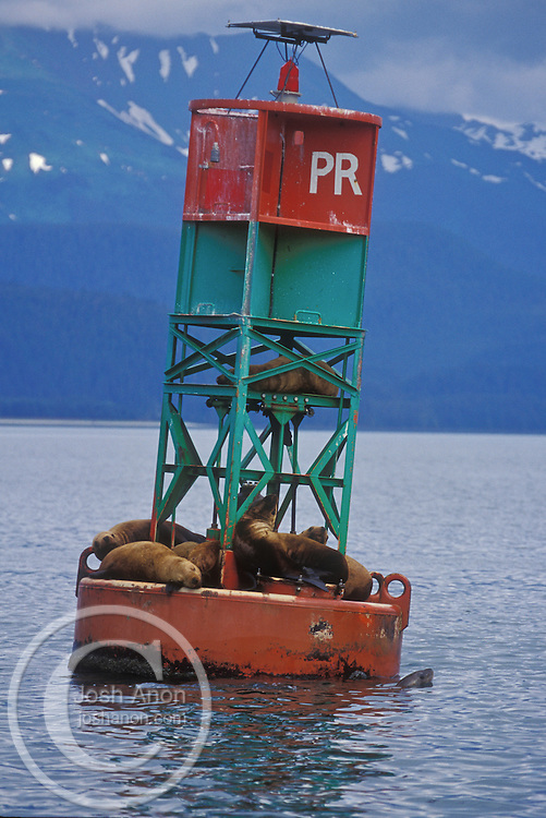 USA, Juneau, Alaska. Stellar sea lions rest on a buoy in Alaska's Inside Passage. Credit as: © Josh Anon / Jaynes Gallery / DanitaDelimont.com