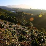 The sun rises over the Starbucks-owned Hacienda Alsacia coffee farm in Costa Rica . (Joshua Trujillo, Starbucks)