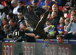 General view of the Crystal Palace mascot eagle before the match  - Mandatory byline: Jack Phillips/JMP - 07966386802 - 31/10/2015 - SPORT - FOOTBALL - London - Selhurst Park Stadium - Crystal Palace v Manchester United - Barclays Premier League