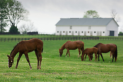Hinkle Farm is home to top stakes producing mares including Derby 142 favorite Nyquist and 2016 Ashland Stakes Weep No More, Wednesday, April 27, 2016 at Hinkle Farm in Paris.