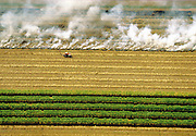 Burning sugarcane reduces excess plant material before cane stalks are transported for refining.