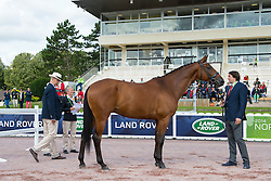Yu Jen Sun, (TPE), Miss Finnland, - Horse Inspection Para Dressage - Alltech FEI World Equestrian Games™ 2014 - Normandy, France.<br /> © Hippo Foto Team - Jon Stroud<br /> 25/06/14