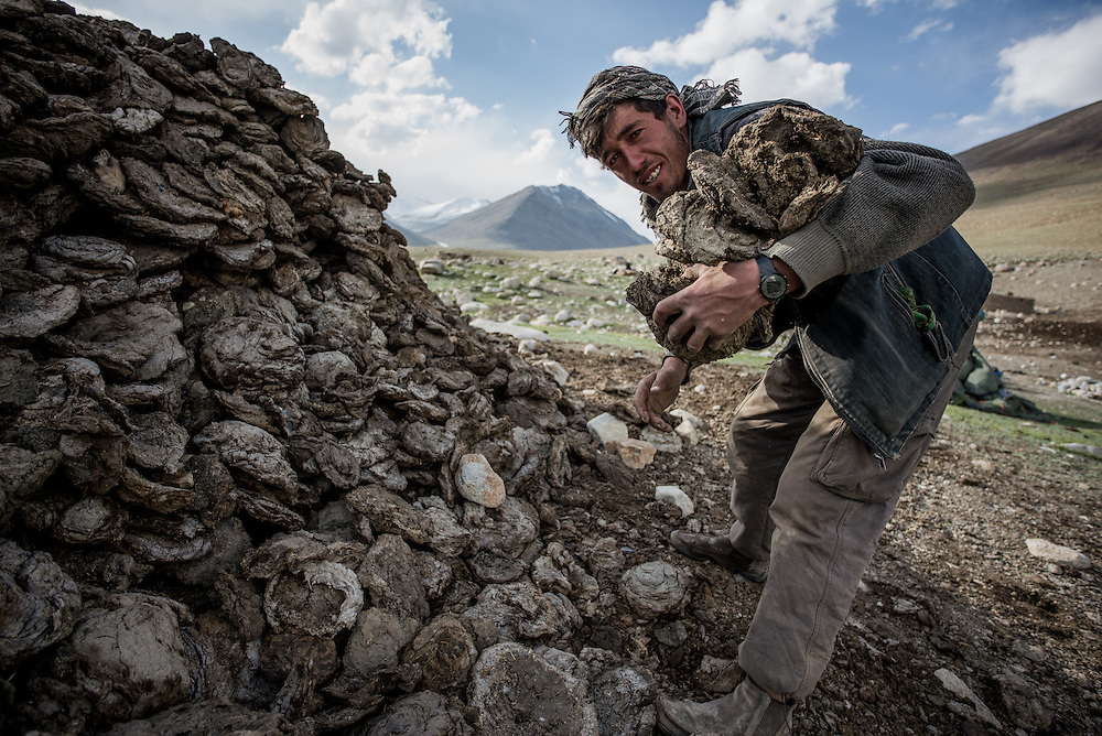 Collecting dried yak dung for the cooking fire. There are few trees up here in the Wakhan. The yak dung smokes fiercely when burnt, filling the stone huts our team sometimes used for cooking duties with thick acrid smoke.
