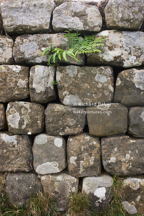 Detail of precisely-built stones of Roman Hadrian's Wall, once the northern frontier of Rome's empire from Barbarian tribes.