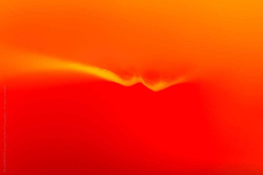 extreme macro of flower petal resulting in a warm colour field of saturated red and orange