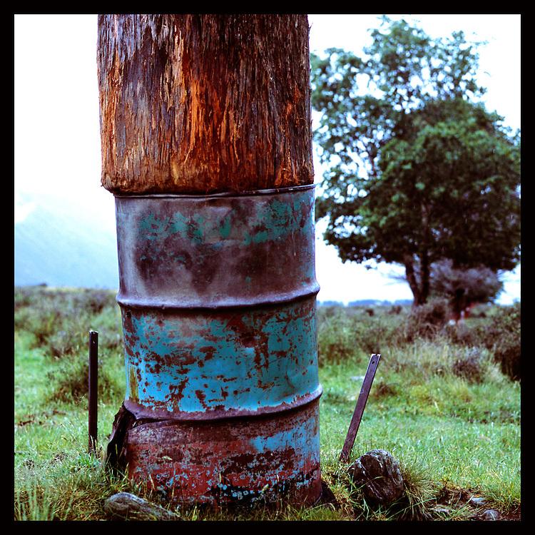 Tree, New Zealand.