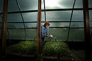 Suzanne Peabody Ashworth  looks over her cherrry tomato plants at her farm. Suzanne Peabody Ashworth is a one-woman dynamo in greens. At her family's Peabody Ranch, she farms 68 acres of organic vegetables, including hundreds of different crops. Her produce is featured in most of the better restaurants in the area. She's changing the way people eat -- and think -- about food locally. She's also an avid seed saver, collecting and propogating rare veggies so they survive for future generations.  April 1, 2009.
