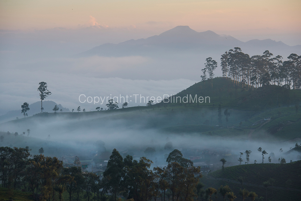 Views along the drive up to Liptons Seat. Dambatenne Tea Estate.