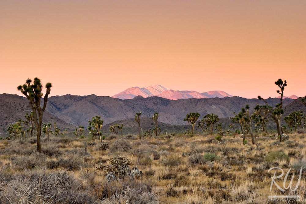 Winter Sunrise View of Mount San Gorgonio, Joshua Tree National Park, California