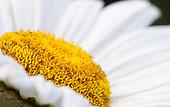 The Photo Gardener Sampler