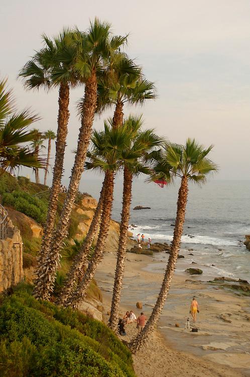 Palm Tree, Laguna Beach, California, United States of America
