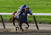 "Metropolitan Handicap winner in 2012, ""Shackleford,"" hold on to win by a thin nose with John Velasquez aboard."