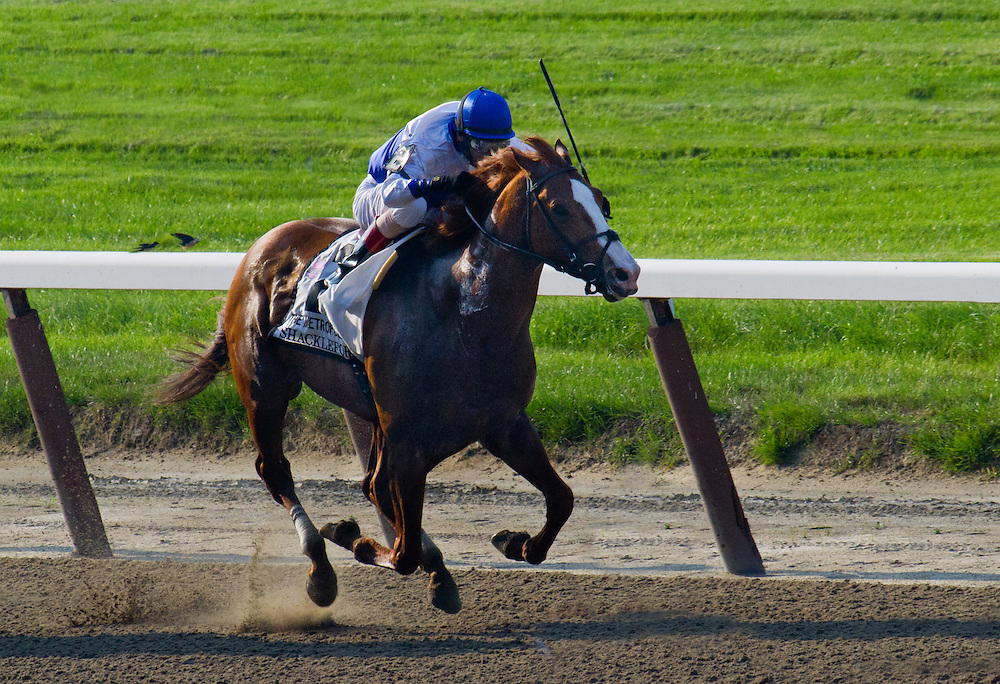 """Metropolitan Handicap winner in 2012, """"Shackleford,"""" hold on to win by a thin nose with John Velasquez aboard."""