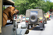 Miss Tater enjoys the ride with the 9th Infantry Division re-enactors during the Waterbury 4th of July Parade on Saturday