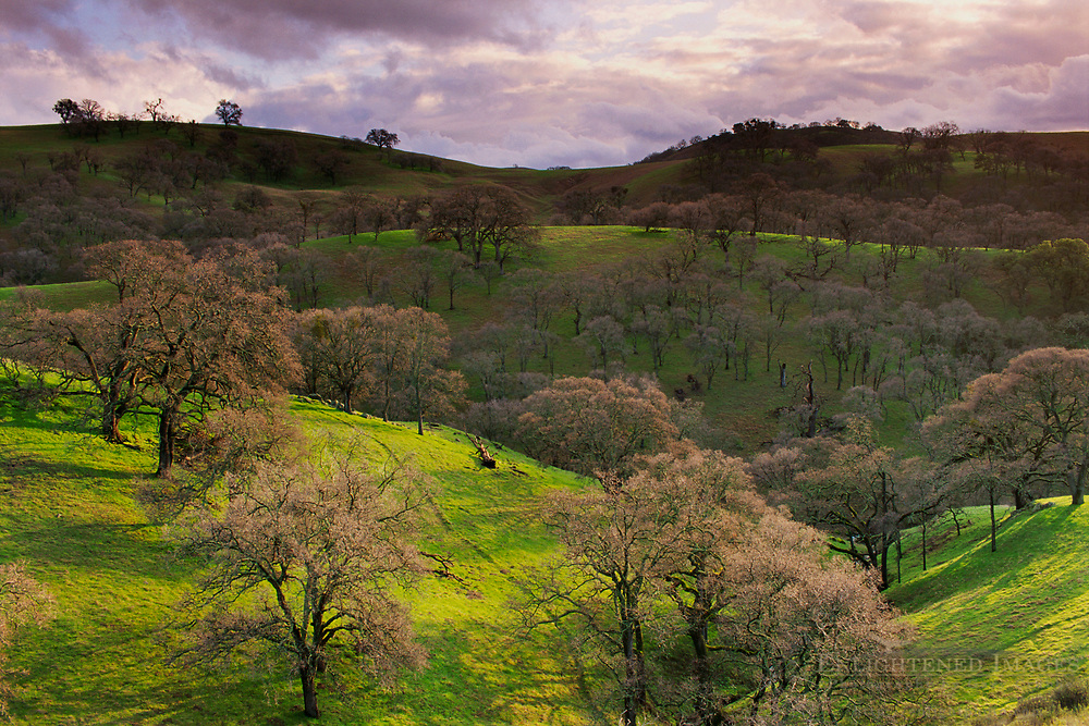 Oak trees, green grass, and sunlight, Mt. Diablo State Park, Contra Costa County, CALIFORNIA