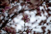 A blooming tree in the beginning of April.