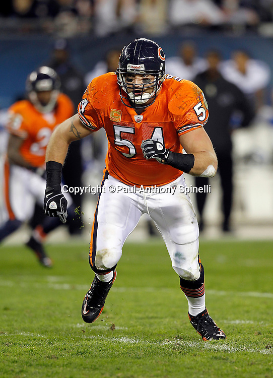 Chicago Bears middle linebacker Brian Urlacher (54) chases the action during the NFL week 10 football game against the Detroit Lions on Sunday, November 13, 2011 in Chicago, Illinois. The Bears won the game 37-13. ©Paul Anthony Spinelli