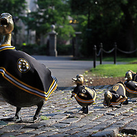 "Boston, New England and fans around the country have Bruins fever. A Bruins parade is already on its way at the Boston Public Garden where the famous bronze statue ""Make way for Ducklings"" is decorated in yellow and black capes. A favorite Boston landmark and tourist attraction for young and old, this bronze sculpture by Nancy Schoen was created in 1987 celebrating the 150th anniversary of the Boston Public Garden. It pays tribute to Robert McCloskeys popular children book, written in 1941, about a family of ducks who make their home here. To reach the lagoon in the Public Garden, Mrs. Mallard, the mother duck, leads her babies across a series of dangerous streets assisted by a friendly police officer. Because of the storys close association with Boston, no replicas exist in other cities, with the exception of an installation in Gorky Park in Moscow at the request of Russian First Lady Raisa Gorbachev. <br />