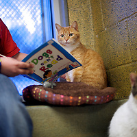 "Desmond Allen reads to ""Ginger,"" a cat up for adoption, during ""The Book Buddies Program"" at the Animal Rescue League of Berks County in Birdsboro, PA on February 11, 2014.  Children in grades 1-8 read to the cats as a way to improve their reading skills and gain confidence.  The shelter animals can be a non-evaluative presence that can provide support and comfort to participants without judging them.  Students showed sustained focus and maintained a higher state of awareness, as well as improved attitudes toward school, according to researchers at Tufts University.  Photo taken February 11, 2014.  REUTERS/Mark Makela  (UNITED STATES)"