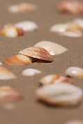 Seashells on the sea shore