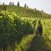 Exploring the vines at St Hubertus Estate Winery, Kelowna BC