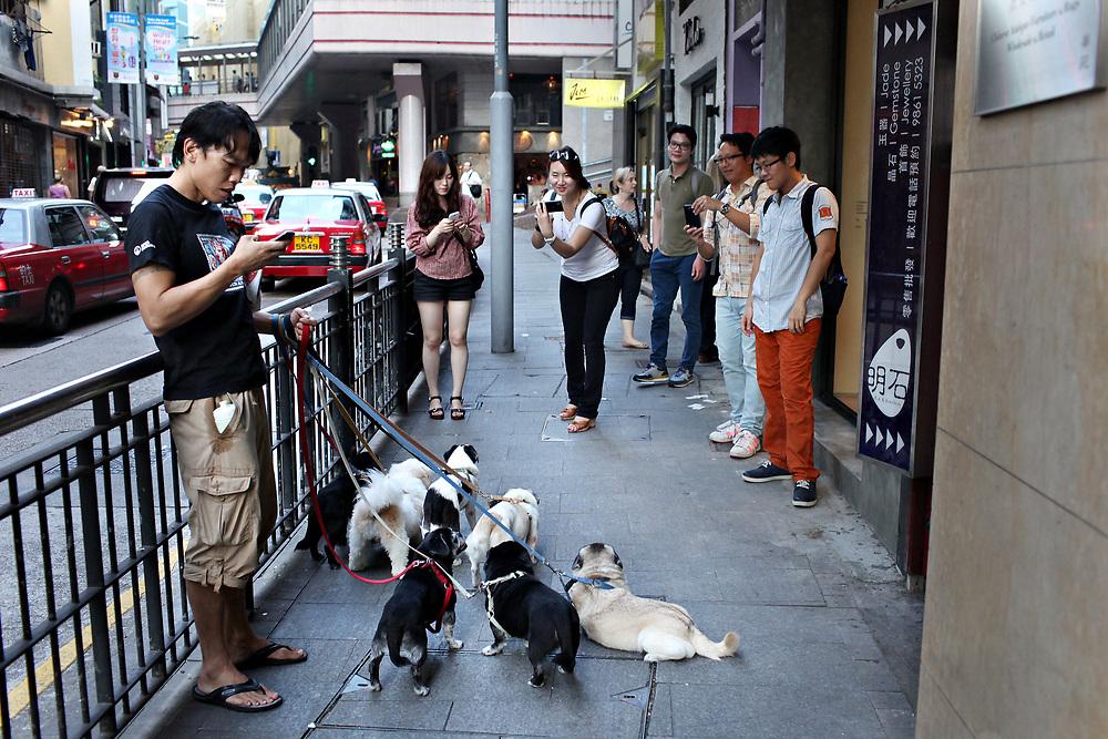 Dog walker takes a beak on Hollywood road, Hong Kong China; September, 2013.