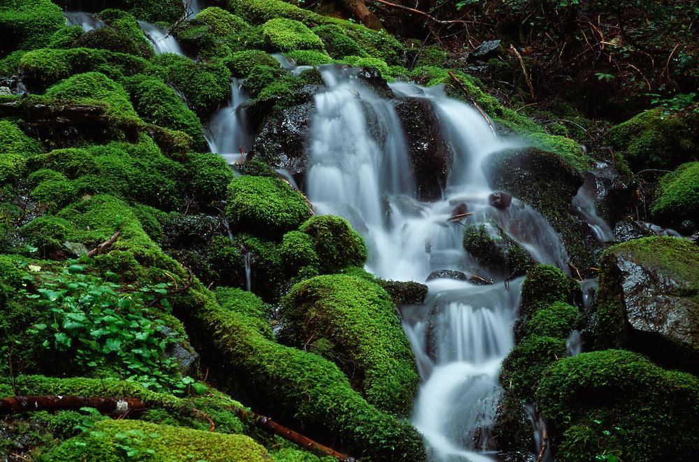 Washington, waterfall amid mossy rocks in forest