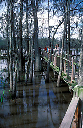 Vinton:  A boardwalk adjacent to the Louisiana Visitors Center lets people walk out into the southern portion of Blue Elbow Swamp.