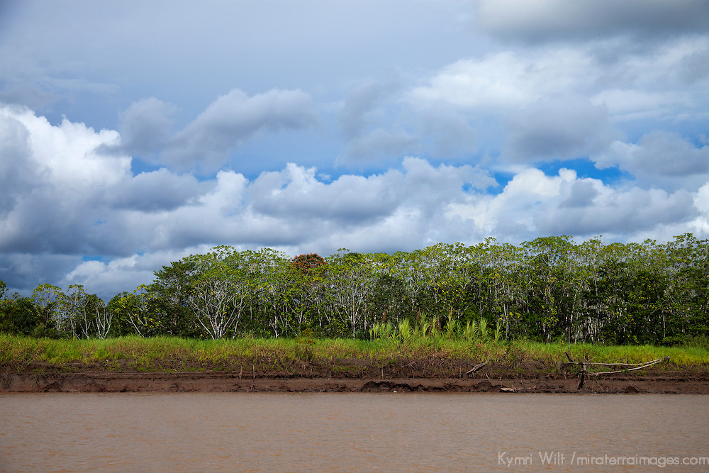 South America, Peru, Amazon. Amazon trees and cloudy skies.