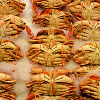 Dungeness Crabs on Ice at Public Market Center in Seattle, Washington