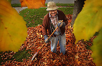 """JEROME A. POLLOS/Press..Bill McKee, 84, wades through the pile of leaves he built while raking under his horse chestnut tree on Thursday. """"The first winter we had chestnuts I got all excited,"""" said the 35-year resident at 5th Street and Reid Avenue. """"I thought, 'Hot dog! We gonna have chestnuts.' So I threw them in the oven before dinner and a while later it sounded like firecrackers were going off in the oven. We forgot to split 'em."""""""