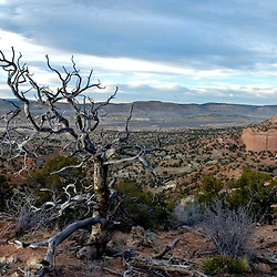 A dead tree is illuminated over the vast landscape that makes up Red Rock State Park.