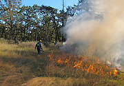 Prescribed burning in a Garry Oak Meadow to restore native biodiversity
