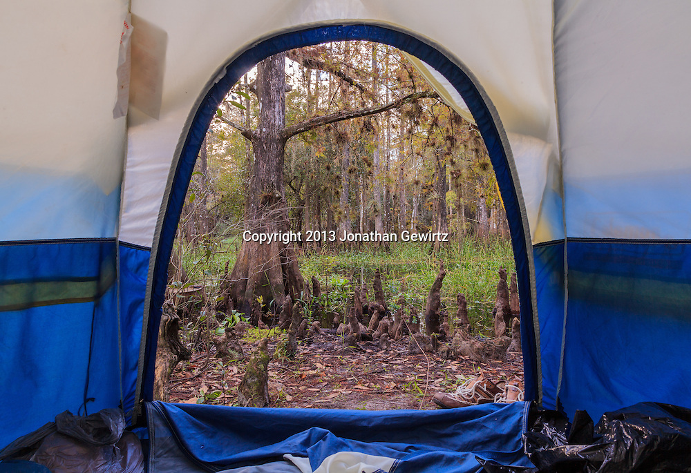 A view of the cypress forest and swamp from the inside of a camping tent in Florida's Fisheating Creek Wildlife Management Area (WMA). WATERMARKS WILL NOT APPEAR ON PRINTS OR LICENSED IMAGES.