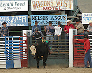 Bull Riding, Bucking Bull, Bull, Rodeo, Salmon, Idaho