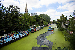 © Licensed to London News Pictures. 23/07/2018. London, UK. A dredger is used to remove green algae from the the Grand Union canal at Little Venice in central London. The algae flourishes in sustained periods of warm weather. Forecasters are predicting record temperatures this week. Photo credit: Ben Cawthra/LNP