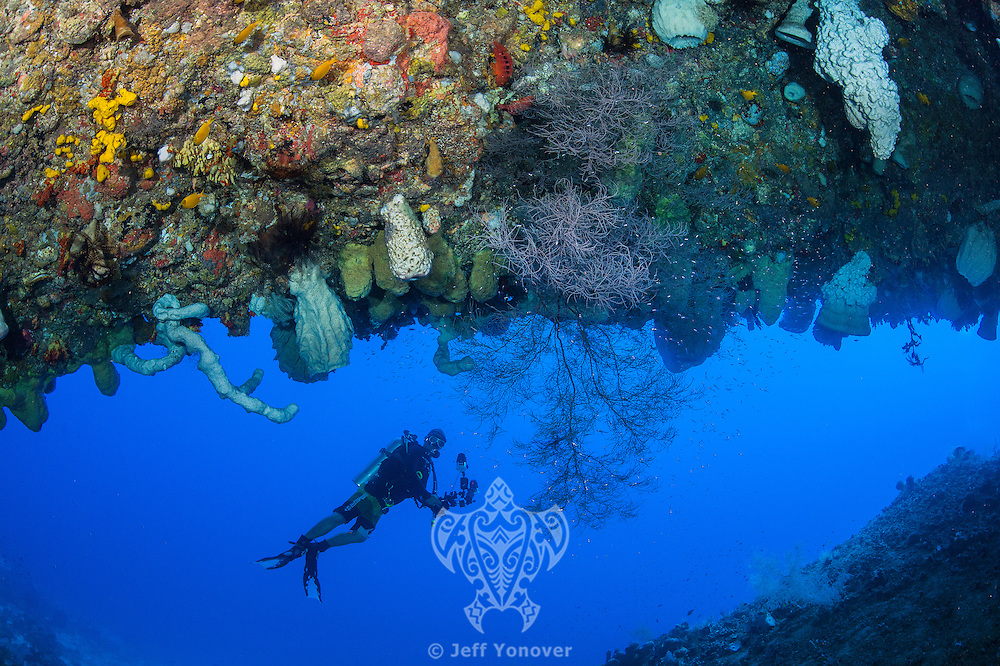 A Diver inspects a deep reef cavern with sponges and black corals<br /> <br /> Shot in Indonesia