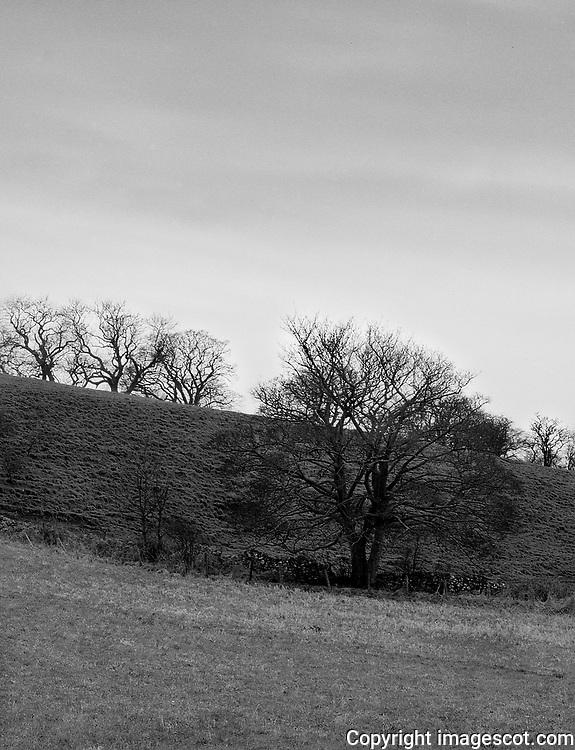 Winter trees blackandwhite