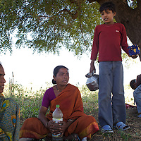 LtoR: Afsanabi, age 35; Sairabi, age 40; Shahrukh (Afsanabi's son), age 13, take a break in the shade of a tree while cutting tour dal (lentils)...Photo: Tom Pietrasik.January 2011.Maharashtra, India