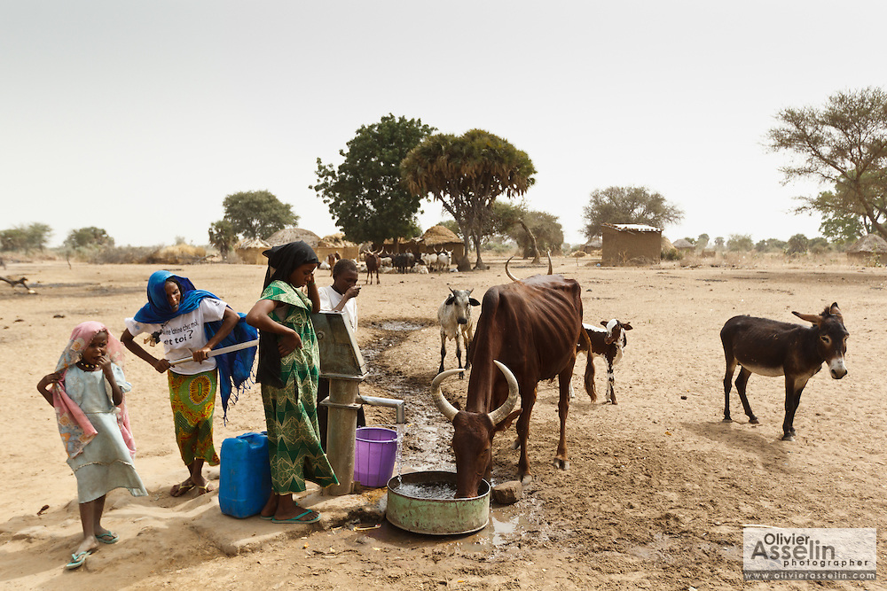 A woman uses a water pump to give a cow to drink in the village of Fadje, Chad on Friday February 10, 2012.