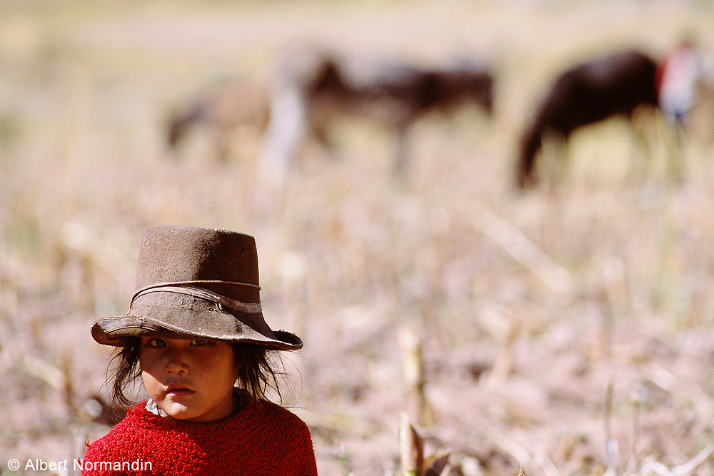 Young girl in hat in farm field with horses