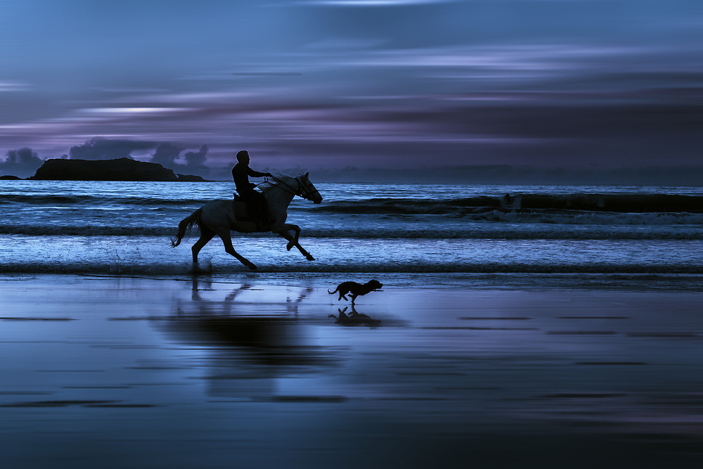 Horse rider in full gallop with dog at the beach.