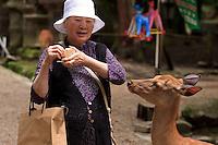 A Japanese woman feeds the wild deer at the entrance to Kasuga Taisha Shrine in Nara, Japan.