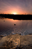 Contrails in Sky at Sunset While Creek Empties into Upper Newport Bay with Ducks in Water, Newport Beach, California (Cloned some elements out of sky)