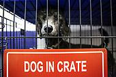 11-28-18-Medway-Dog