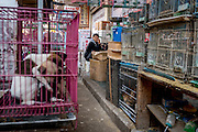 An animal and flower market in Xishuangbanna, China.